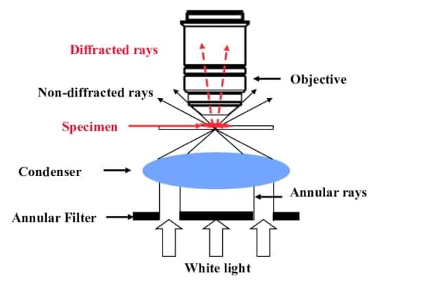 How does dark field microscopy work