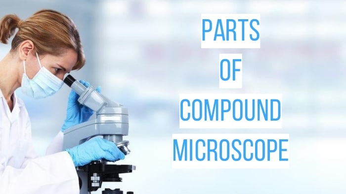Parts of a Light Compoud Microscope (guide)