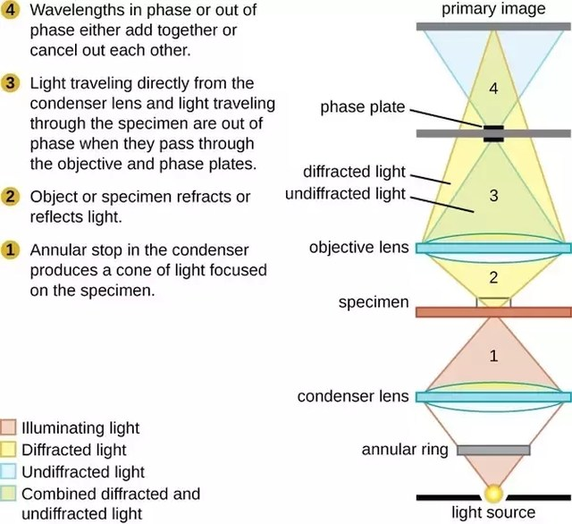What is dark field microscopy used for