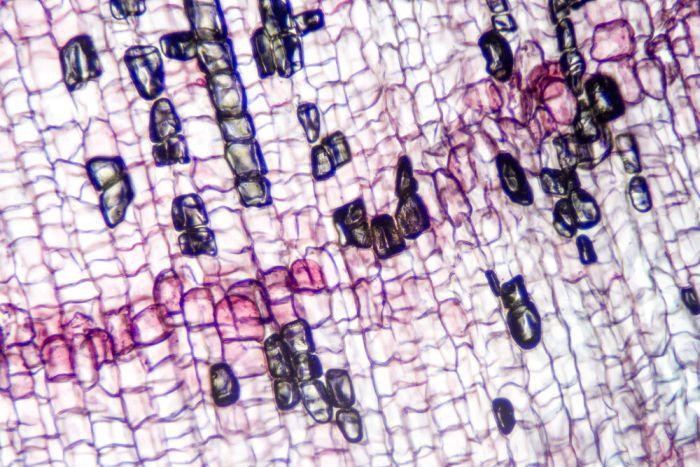 Cork Cells view