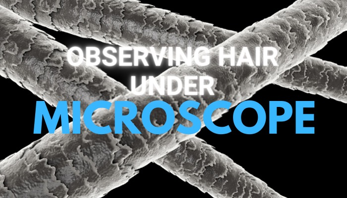 Observing Hair Under Microscope Guide